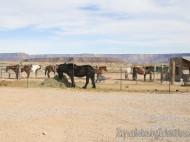 Rancho de caballos - Hualapai Ranch
