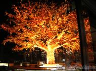 Londres - Shushisamba árbol - 2maletasy1destino