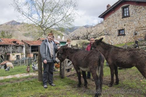 Con los burros