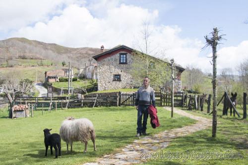 Pepín con las ovejas en La Torraya