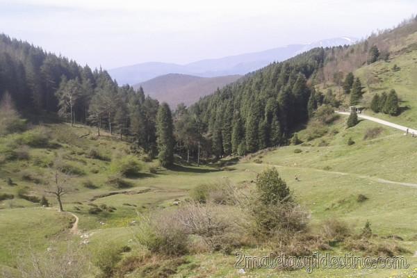 Pinos en Parque Urkiola