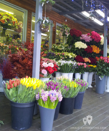 Flores en Vilnius