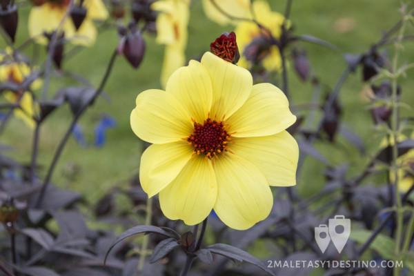 Flor en Frognerparken